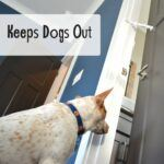How to Keep Dogs Out of the Litter Box: What you NEED to Know!