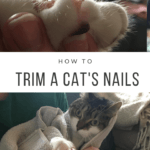 How to Trim a Cat's Nails at Home - A Guide to Success