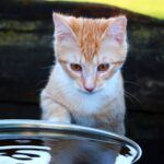 Spill Proof Cat Water Bowls:  7 Great Choices