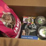Chewy vs. Amazon Pet Delivery: In-Depth Comparison