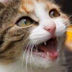 How to Brush a Cat's Teeth in 5 Steps