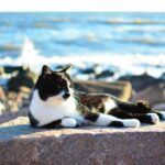 Ocean and Water Themed Cat Names