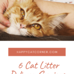 6 Cat Litter Delivery Services for 2020