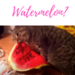 Can Cats Eat Watermelon? Is it bad for them?