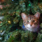 Cat Stocking Stuffer Ideas