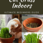 How To Grow Cat Grass (Indoors): Ultimate Beginners Guide