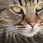 40 Crazy Cat Facts for Kids (+Pictures!)