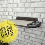 Awesome Dog Proof Cat Feeder Ideas